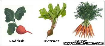 In some cases adventitious roots modifies into a cluster of tuberous roots known as fasciculated roots. Ex&le Sweet potato.  sc 1 st  alladiu0027s & Modifications of Root - My files - File Catalog - alladiu0027s
